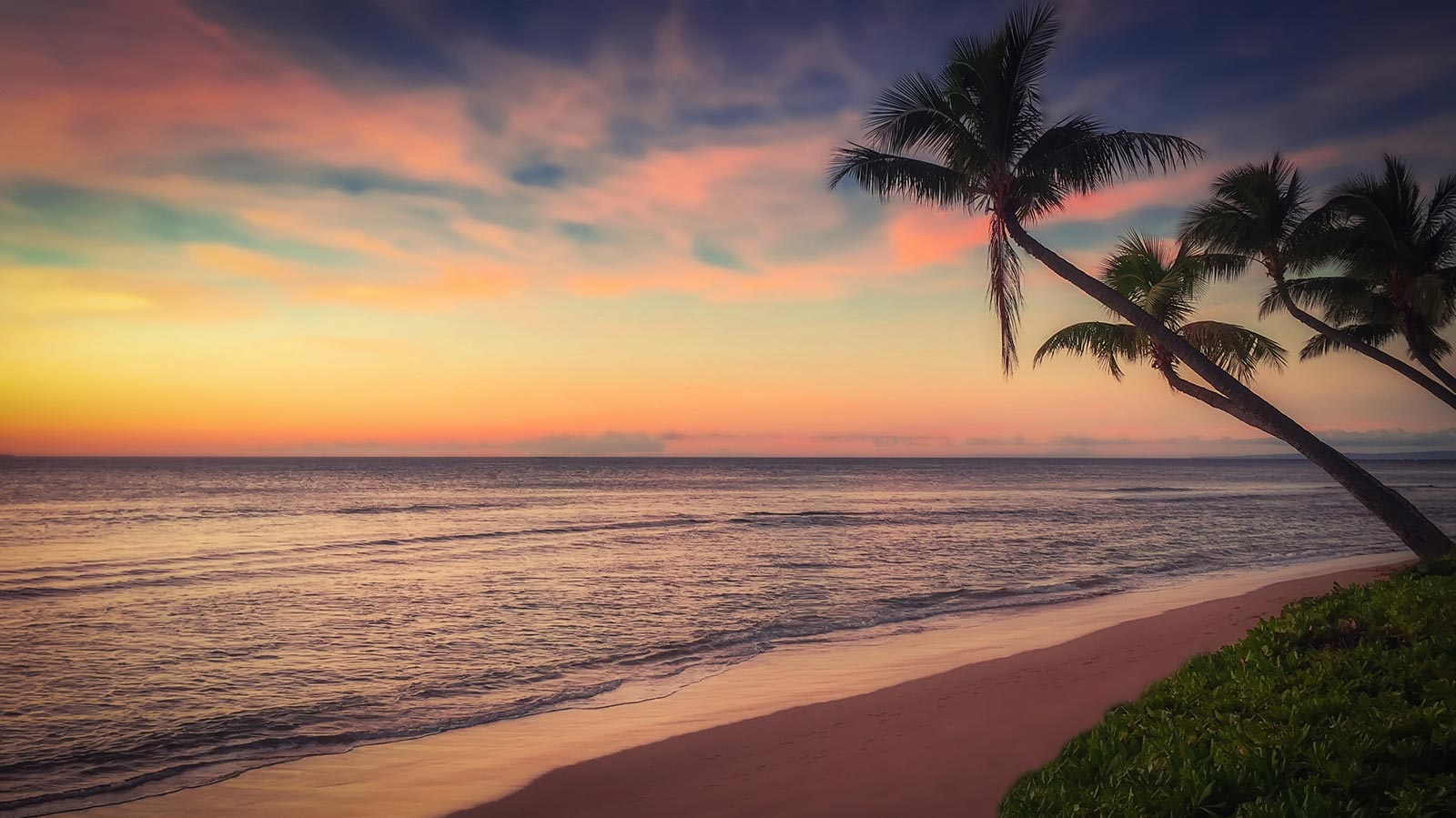Sunset Palm Trees on the Beach | Sunset Coast Construction Services, LLC
